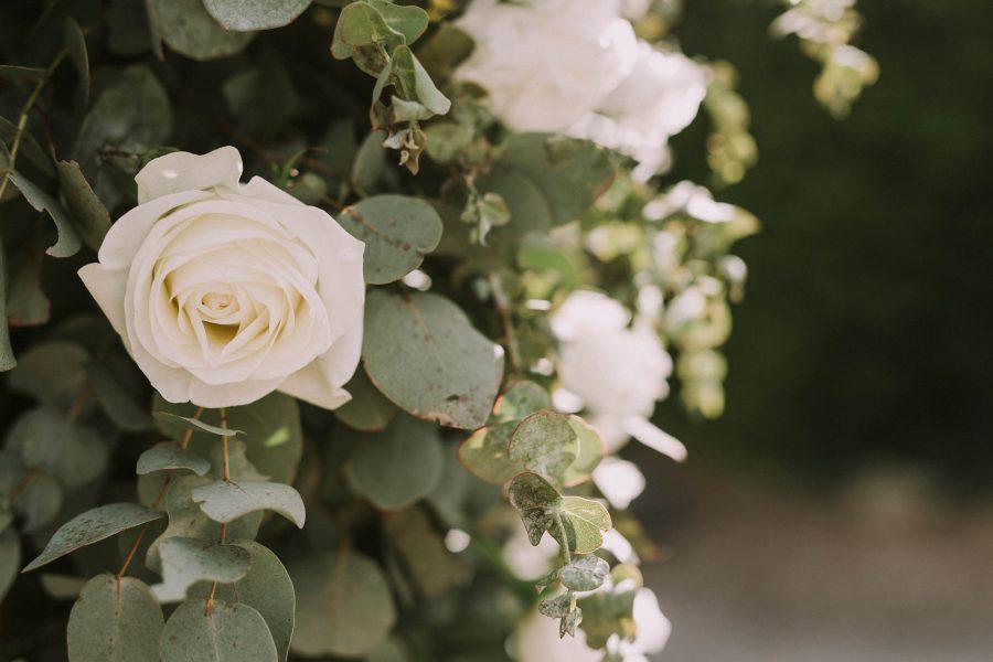 tessa-michael-wedding-80